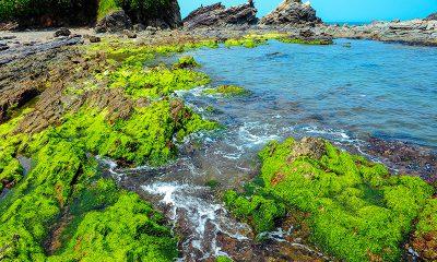 Lớp rêu xanh phủ kín nghềnh đá Bàn Than, trở thành điểm du kịch mới của xã đảo Tam Hải
