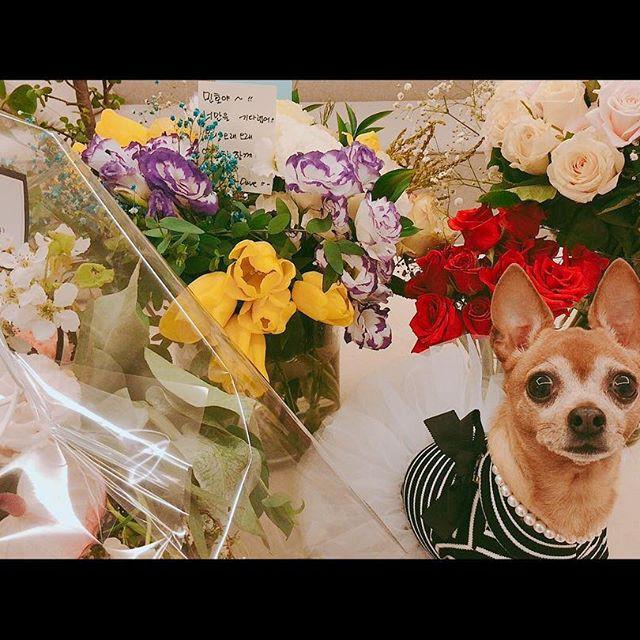 Lee Min Ho chính thức trở lại